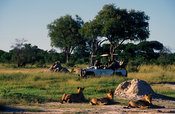 Tourists watching lions, Hwange National Park, Zimbabwe