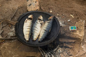Frying fish, Elinkine, Casamance, Senegal