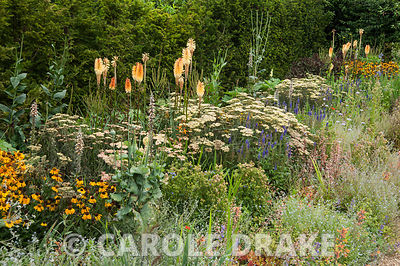 Border including Achillea 'Terracotta', Kniphofia 'Tawny King', helenium, digitalis and heuchera. RHS Garden Harlow Carr, Har...