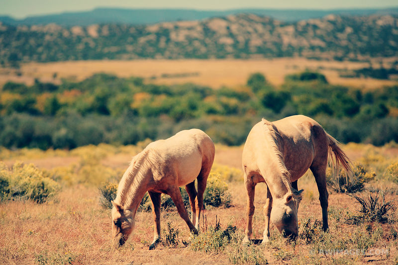 NEW MEXICO : THE HORSES