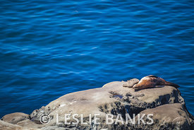 Seals and Sea Lions in La Jolla
