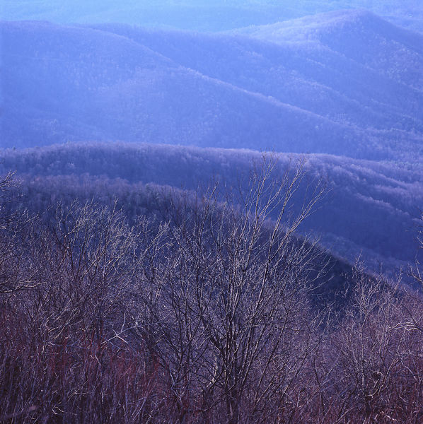 021-Blue_Ridge_D145186_Blue_Ridge_Early_Spring_Tree_Detail_001_Preview