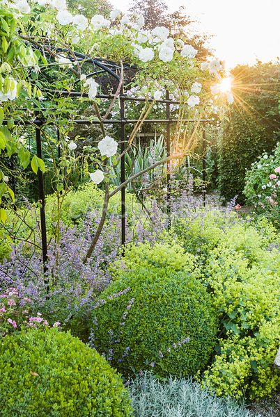 Box spheres along the pergola are softened in summer by foamy Alchemilla mollis and Nepeta 'Six Hills Giant', with grey santo...