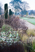 A light frost on a November morning dusts the skeleton forms of herbaceous perennials and grasses including Stipa gigantea, P...