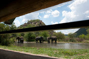 African elephant ( Loxodonta africana africana) seen from a hide, Pilanesberg Game Reserve, South Africa