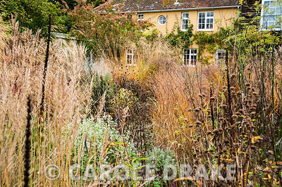 Mix of grasses, silvery Ballota pseudodictamnus and perennials seedheads including phlomis and Digitalis ferruginea, with apr...