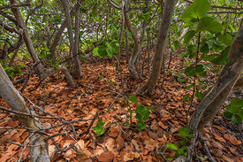 Forest in Bahia Honda State Park