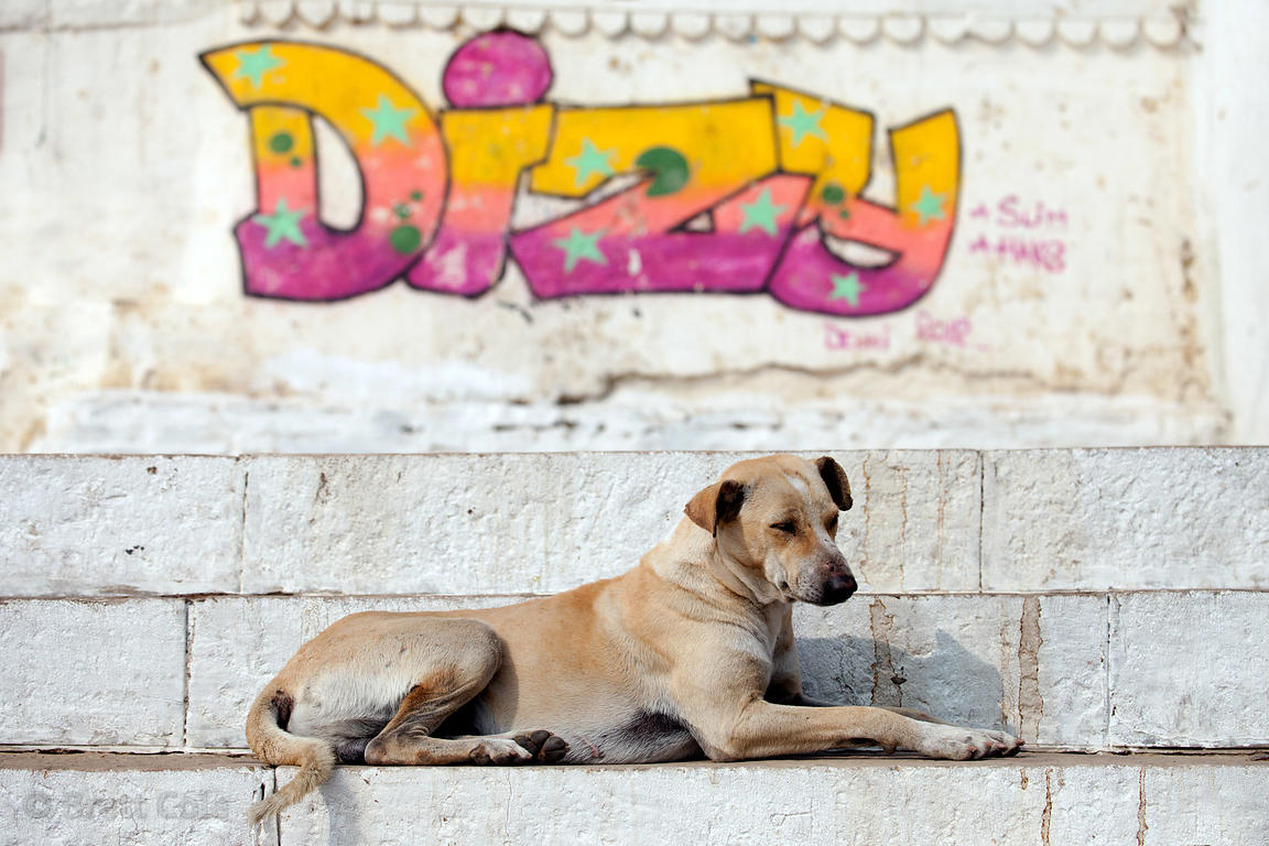 A stray dog sits under graffiti on the ghats in Varanasi, India.