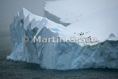Chinstrap Iceberg - commended in the Birds in the Environment category of Bird Photographer of the Year 2018