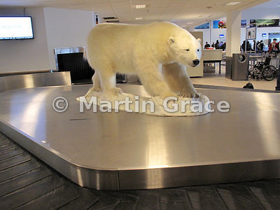 Stuffed Polar Bear (Ursus maritimus) in the centre of the luggage carousel at Svalbard Airport, Longyear