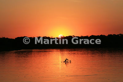 Spectacular colours as the sun sets over River Cuiabá, North Pantanal, Mato Grosso, Brazil, with a small silhouetted floating...