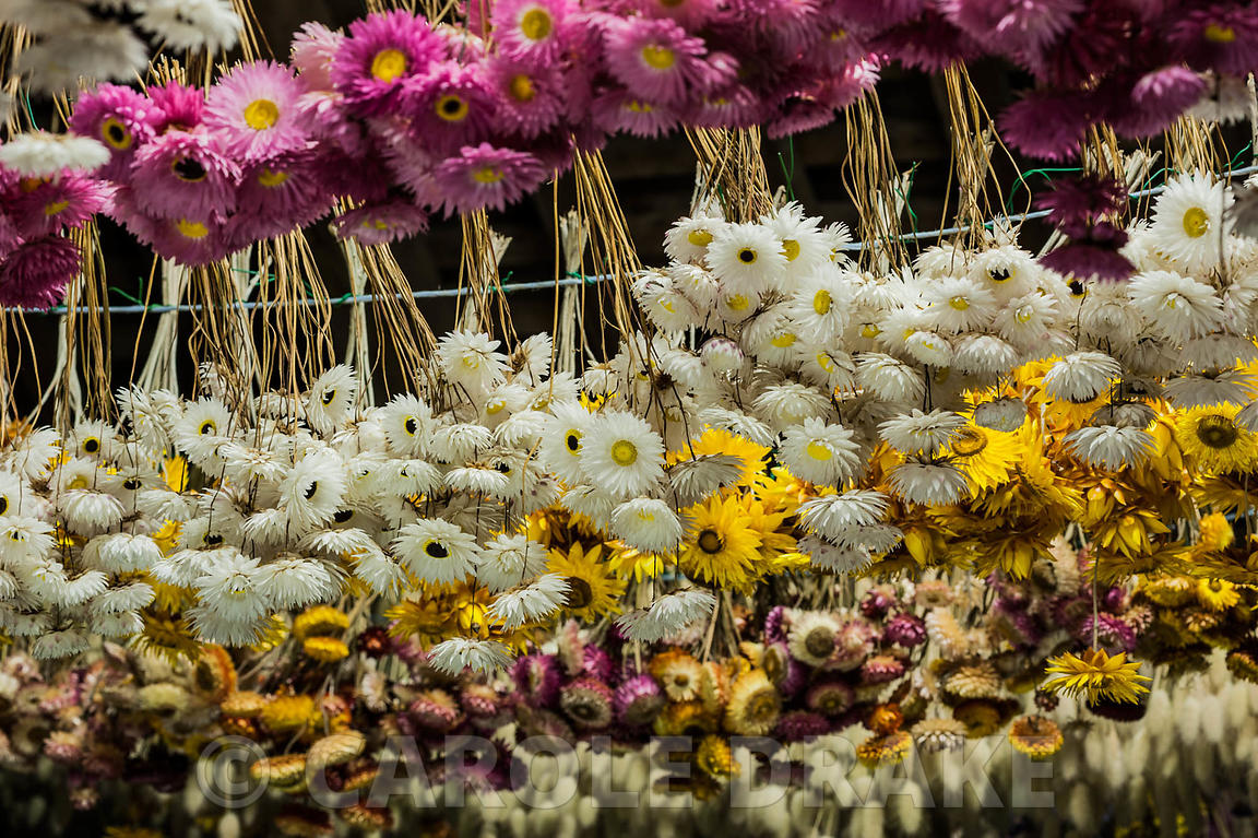 Flowers hanging to dry in the upper barn storage space at Cotehele, St Dominick, nr Saltash, Cornwall, UK