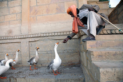 A man feeds geese on Gadi Sagar lake, Jaisalmer, Rajasthan, India