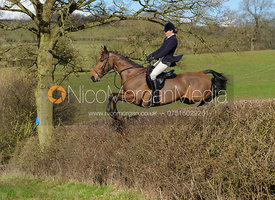 Tricia Ronane jumping a big hedge at Ladywood - The Cottesmore Hunt at Ladywood