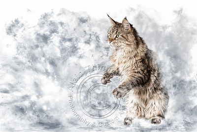Art-Digital-Alain-Thimmesch-Chat-37