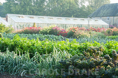 Orderly lines of kale, celeriac and leeks in the walled kitchen garden with ornamentals beyond including dahlias and Ipomoea ...