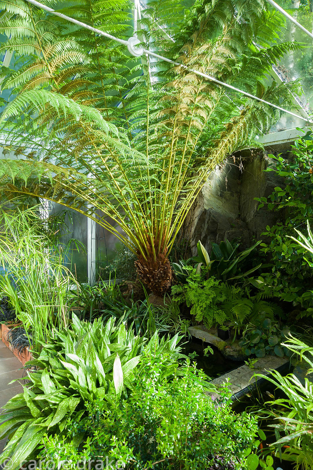 Conservatory built between the house and the rocky outcrop behind it, is home to a range of plants that would not survive in ...
