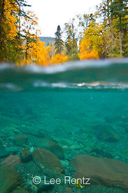 Split Underwater and Above Water View of the North Fork Skokomish River