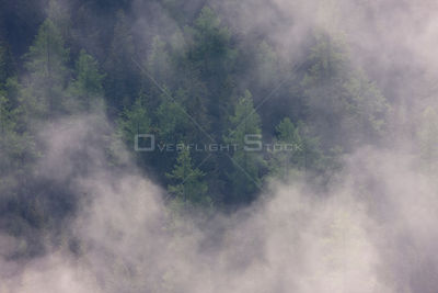 Clouds above old Norway spruce (Picea abies) and Larch (Larix decidua) forest, High Tatras, Carpathian Mountains, Slovakia, J...