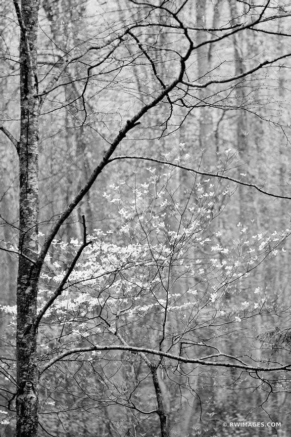 SPRING FOREST SMOKY MOUNTAINS BLACK AND WHITE VERTICAL