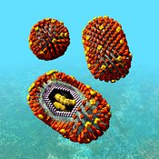 Influenza virus particles scene: whole and cutaway showing internal structure #1