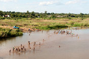 People washing in the Licungo river, Mocuba, Mozambique