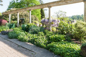 Colonnade along the Great Terrace frames a mixed border including berberis and wisteria. Iford Manor, Bradford-on-Avon, Wilts...