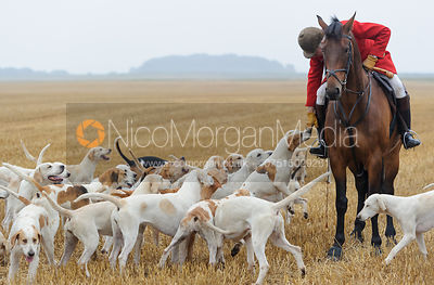 The Cottesmore Hunt at Tongue End 28/6
