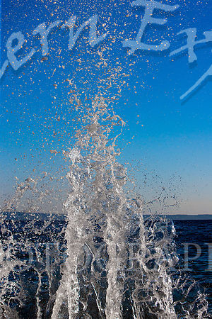 Water_Shoot