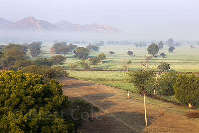 Morning light over wheat fields and mountains, Saradhana, Ajmer, Rajasthan, India