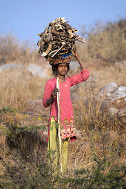 A girl herds goats in the Aravali Range at the highest point in the Pushkar/Ajmer region, Leela Seori, Rajasthan, India, Leel...