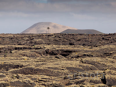 lava field with distant palm tree and mountan