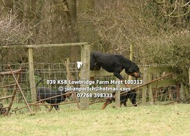 Kent & Surrey Bloodhounds - Lowbridge Farm Meet - 10 March 2013 - © Julian Portch (julianportch@hotmail.com - 07768 398333)