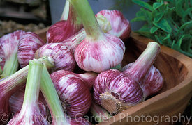 Garlic bulbs stored in a wooden bowl. © Rob Whitworth