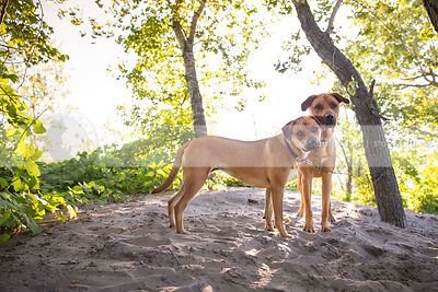 two calm dogs standing together by tree on sand dune