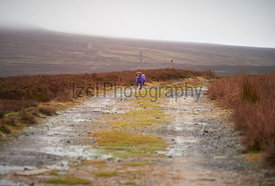 A miniature poodle sprinting down a dirt track on a wet autumn, winters day in England, UK.