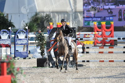 Oliva, Spain - 2019 January 27: Gold tour 1m50 - GP during CSI Mediterranean Equestrian SpringTour 1.(photo: 1clicphoto.com)