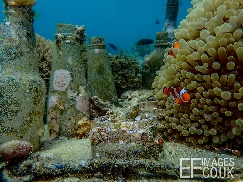Anemone, Clownfish, Tunicates, Soft Coral, Sponge, Coraline Algae, Barnacles, Wrasse - so much life where before there was ju...