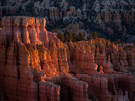 Bryce_Nation_Park_218