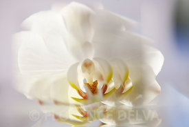 Orchid-9935