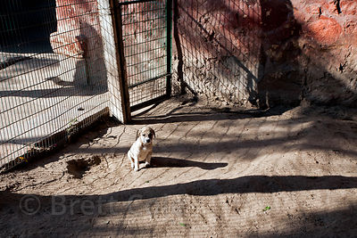 Animals home dog rescue center in Jodhpur, Rajasthan, India. Home to more than 900 dogs. India has millions of stray dogs.