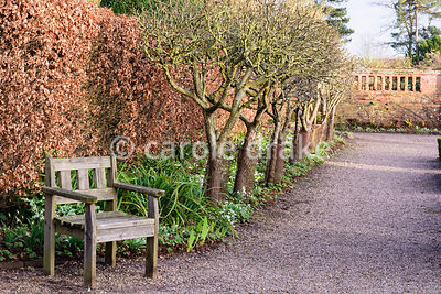 Espaliered fruit trees backed by a beech hedge with wooden seat in the formal garden at Hodsock Priory, Blyth, Notts