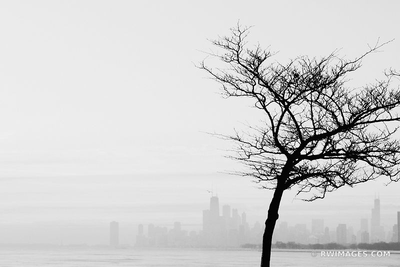 COLD WINTER MORNING CHICAGO SKYLINE WITH BARE TREE BLACK AND WHITE