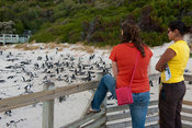 Tourists watching the African penguin colony, Boulders Beach, Cape Peninsula, South Africa