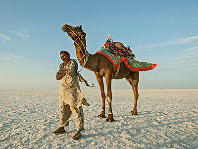 A camel rider gets ready for work