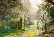 Morning sun reaches a gate made by the late Dave Bissell depicting dragonflies and bulrushes. Moors Meadow Garden and Nursery...