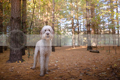 scruffy wet dirty mixed breed dog standing in forest