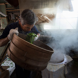 Yasuo Takada tea grower