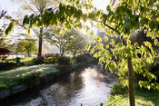 A tributary of the River Avon running through the Japanese garden at Heale House, Middle Woodford, Wiltshire with ferns and G...