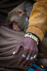 Rings on the hand of a man as he holds his pet monkey, Varanasi, India.